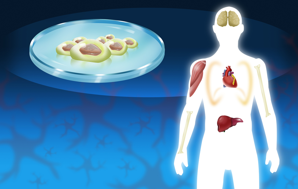 Lung Regeneration: One Step Closer with the Help of Stem Cells