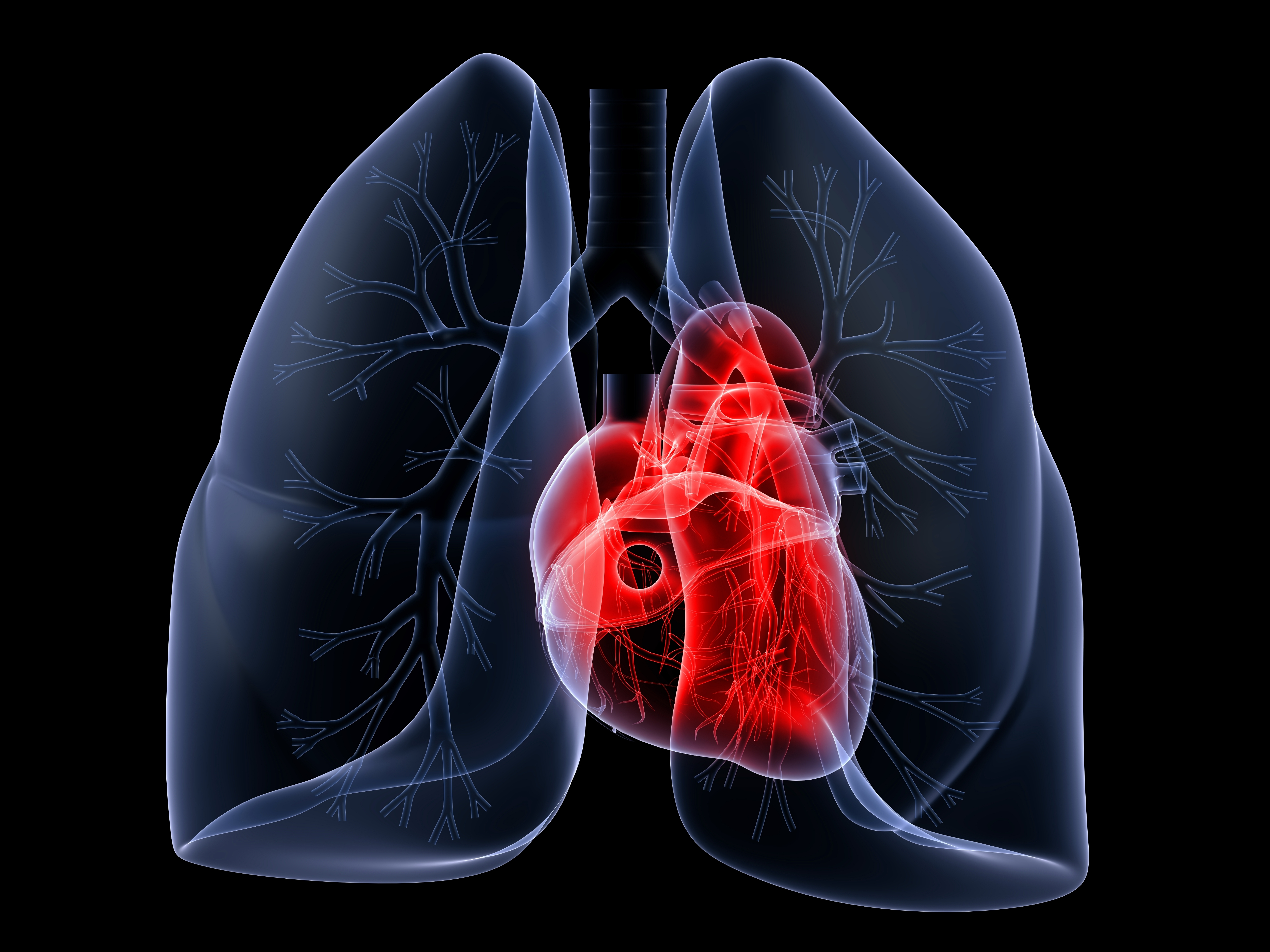 Quadriceps Endurance is Reduced in Individuals with COPD