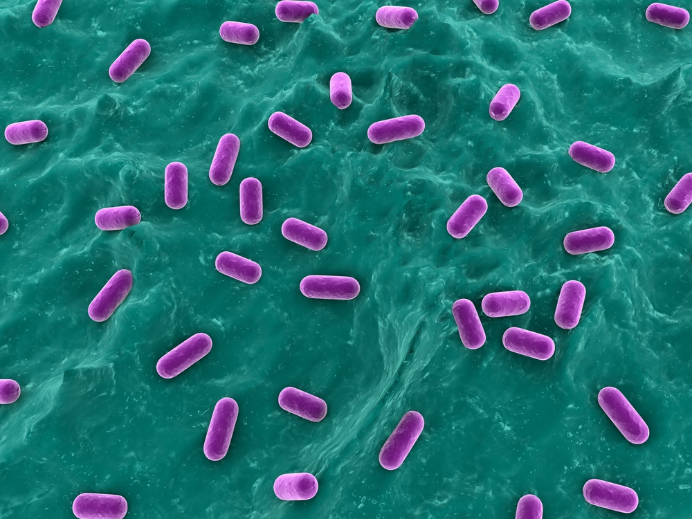 Probiotics Improve Anti-Tumor Drugs' Effect in a Lung Cancer Mouse Model