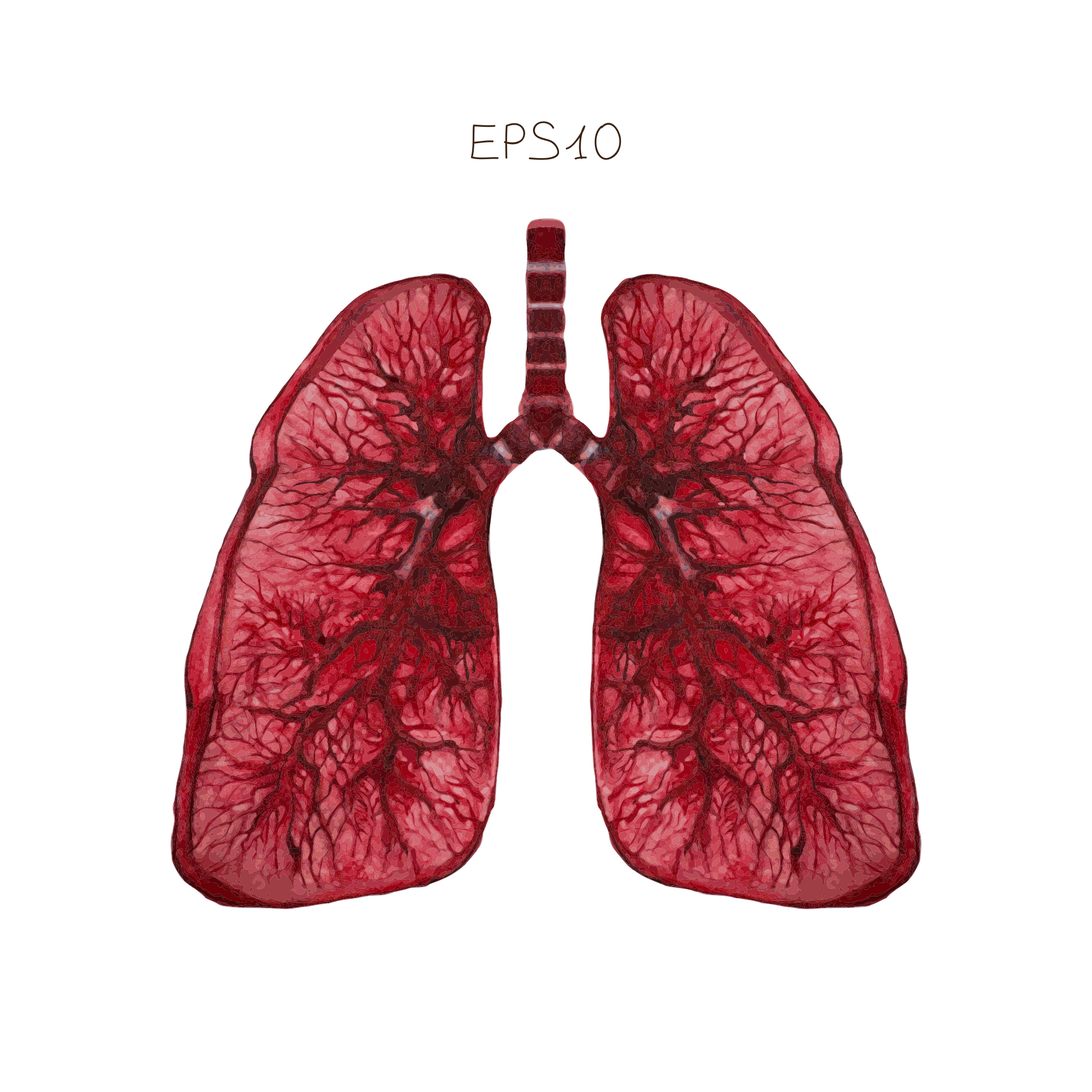 Researchers Discover KLF4 is a Crucial Factor in Pulmonary Hypertension