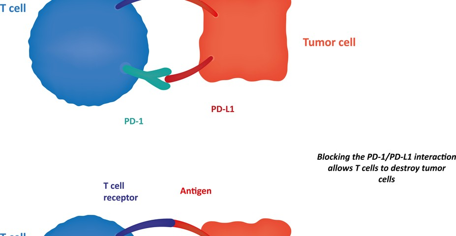 PD-L1 Protein Expression Needs Further Assays to Become a Biomarker for NSCLC